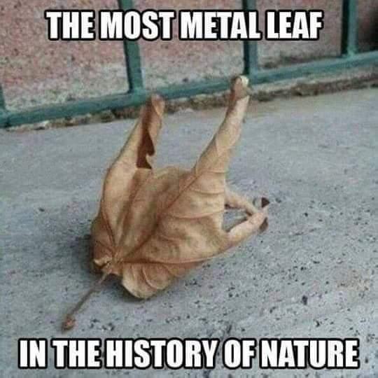 Metal - meme