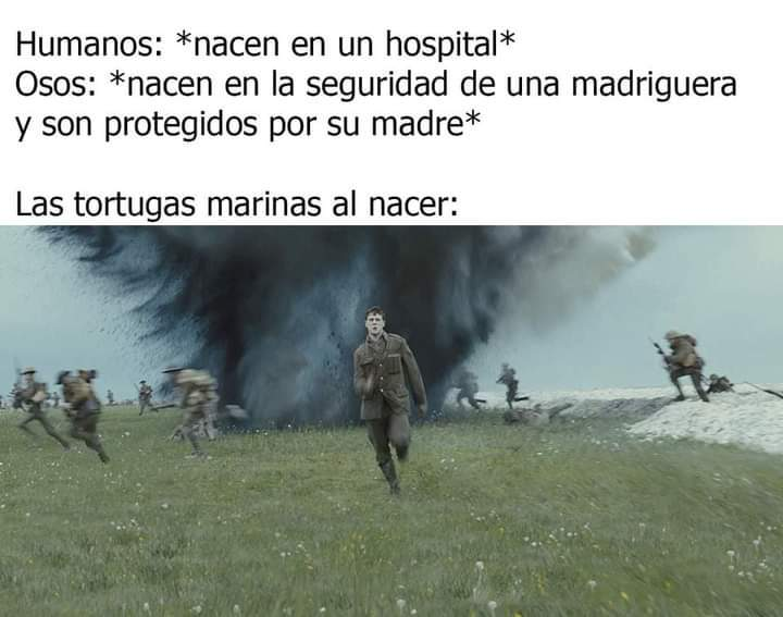 1917 - meme
