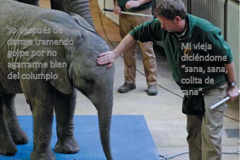 La Plantilla: https://i.ibb.co/02HBVbb/elefante.png - meme