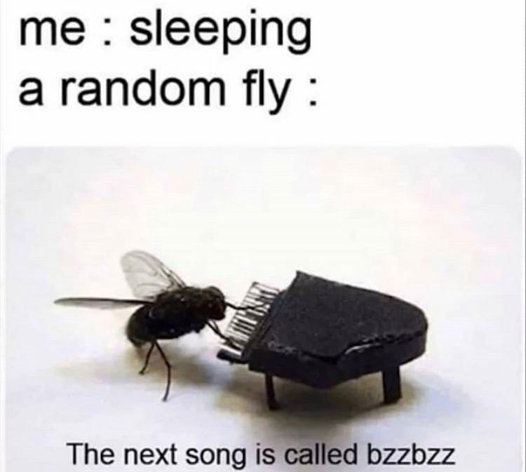bzzbzz - meme