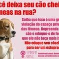 aonde vai parar o feminismo animal?