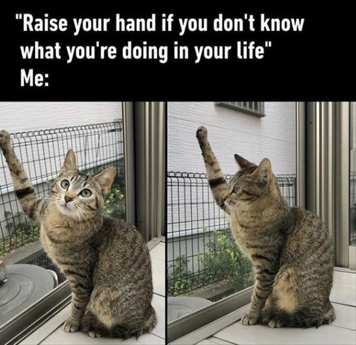 *raises hand and keeps it up for the rest of my useless life - meme