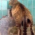 Un chat avec un enorme... ah non