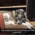 how dogs truly feel