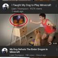 Pro doggo gamer