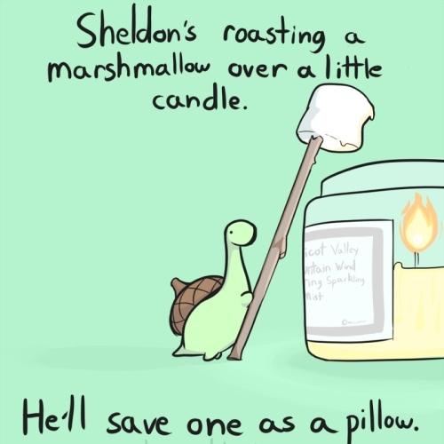 aww Sheldon - meme