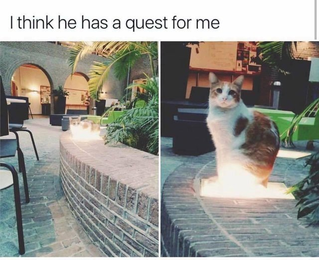 This cat has a quest for you - meme