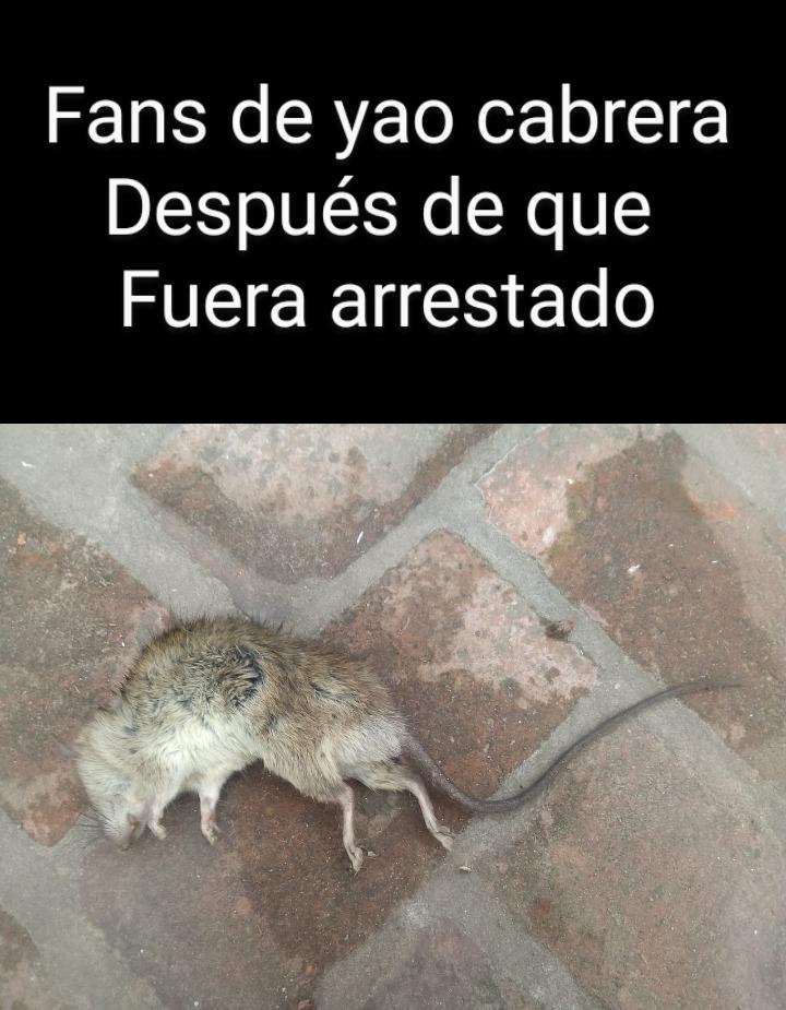 Rata muerta - meme