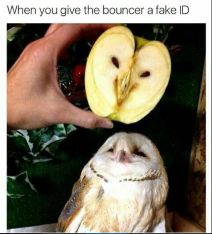 Bird+Apple=Bipple - meme