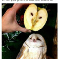 Bird+Apple=Bipple