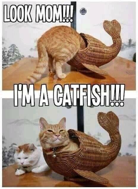 Cat to fish - meme