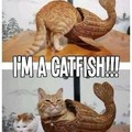 Cat to fish