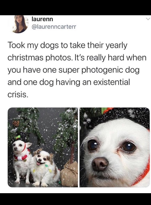 this is my parents taking pictures - meme