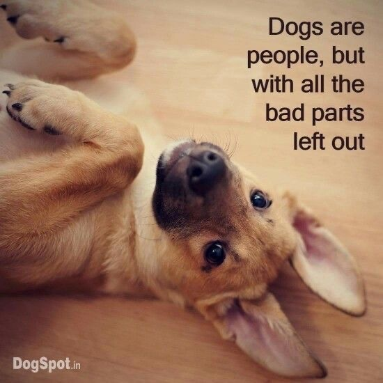 dogs are the best people - meme
