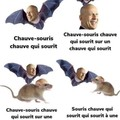 En conclusion:Souris qui souris a une chauve souris
