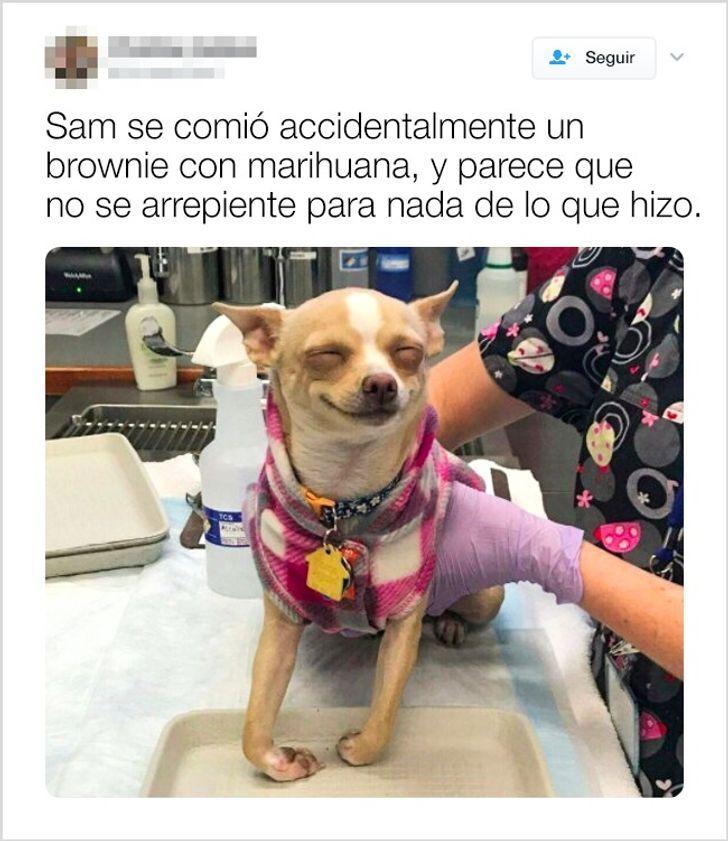El título es la enfermera cuidando al perro - meme