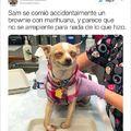 El título es la enfermera cuidando al perro