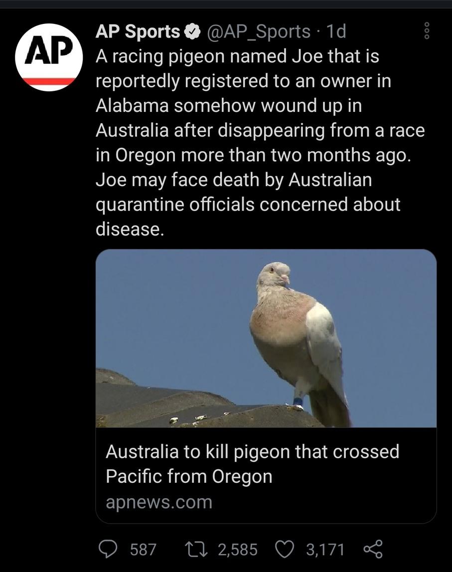 Bird_squeezer has now joined aussie. - meme