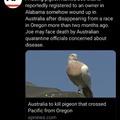 Bird_squeezer has now joined aussie.