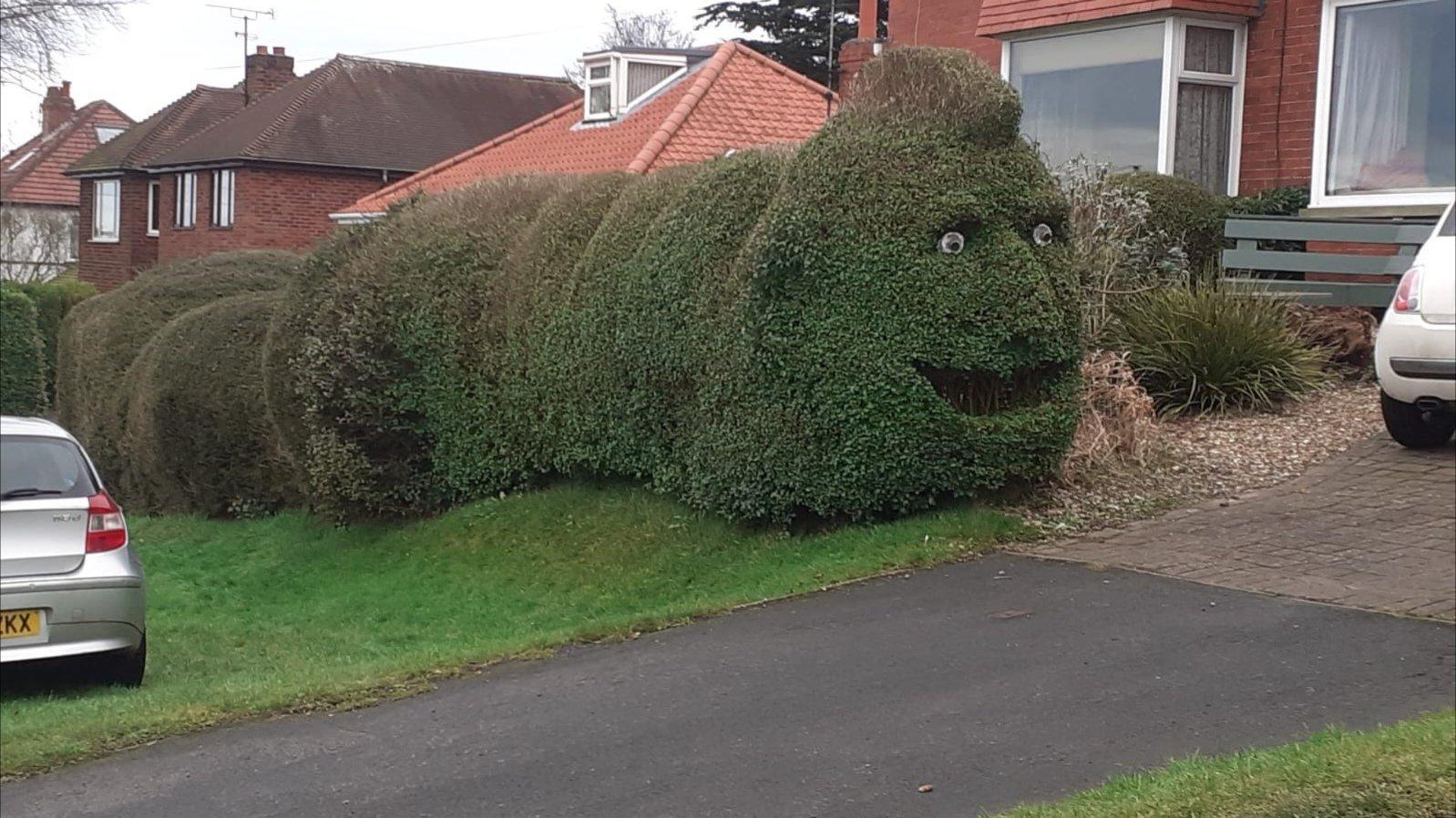 Cursed Hedge - meme