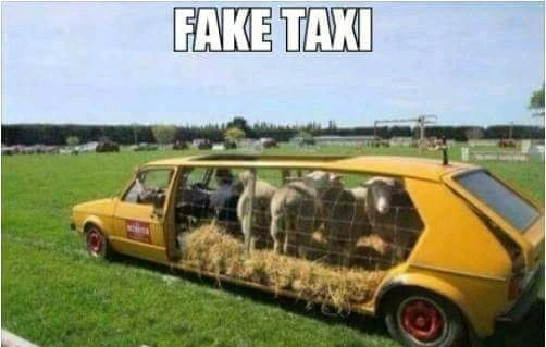 Fake taxi nordestino - meme