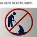 jizz free dolphin