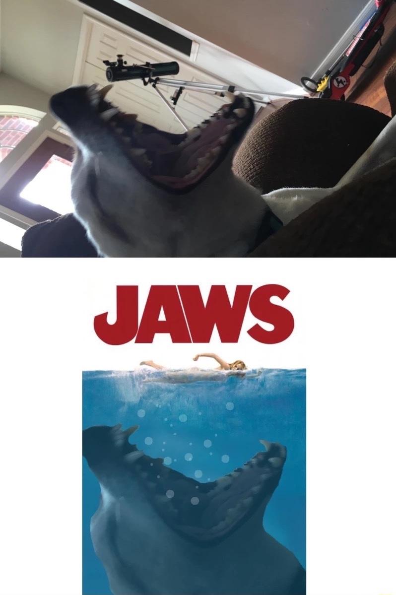 Jaws - meme