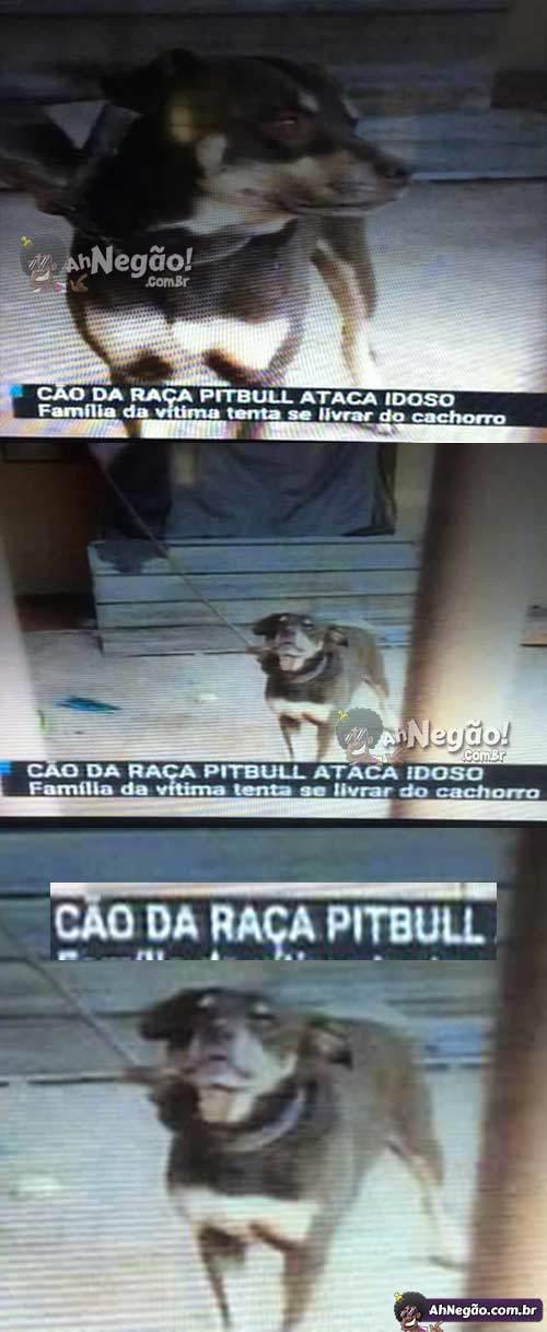 """""""Pitbull"""" - meme"""