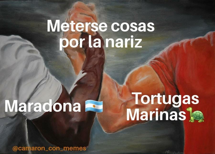 Maradonita papito @camaron_con_memes