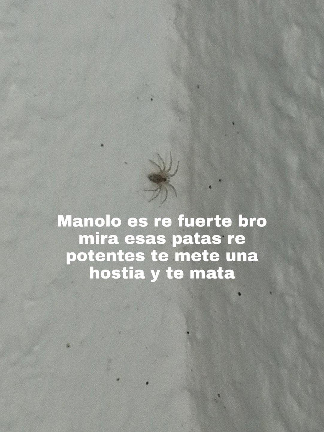 El es Manolo y me preocupa que sea tan grande - meme