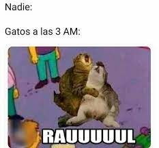 RAUUUUUUUUUUUUL NOOOOOOOOO - meme