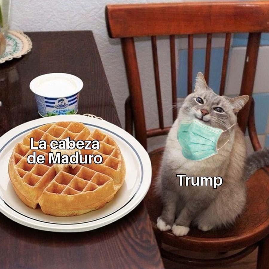Me encanta ese gato - meme