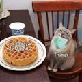 Me encanta ese gato