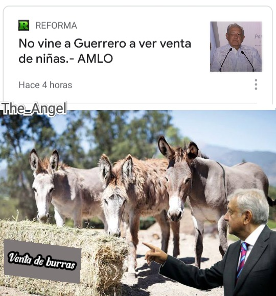 AMLO zoofilico. - meme