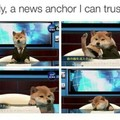 Tonight on the doggo'clock news