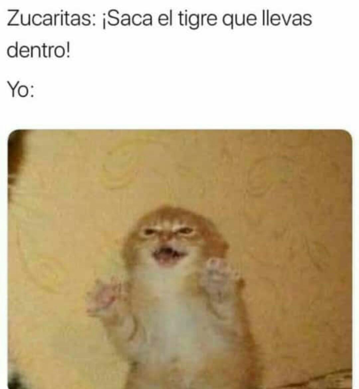 Zucarita :v - meme