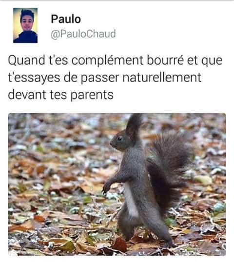 Bourré - meme