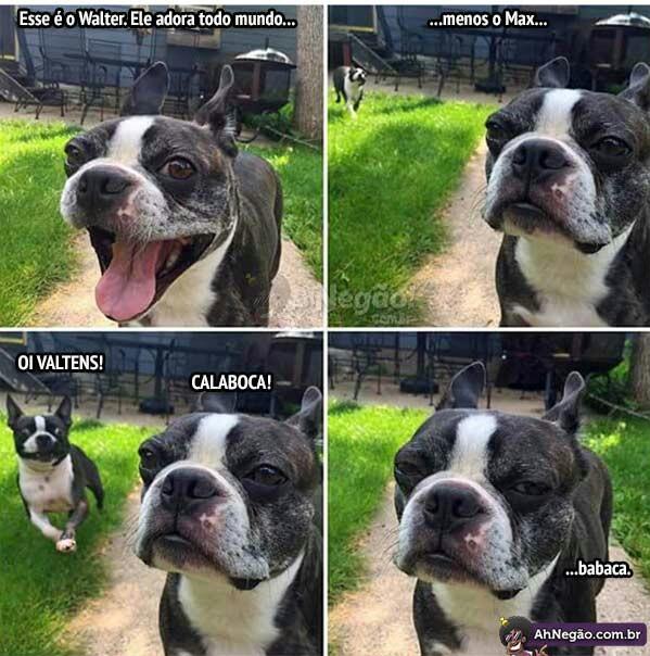 Cachorros #7 - meme