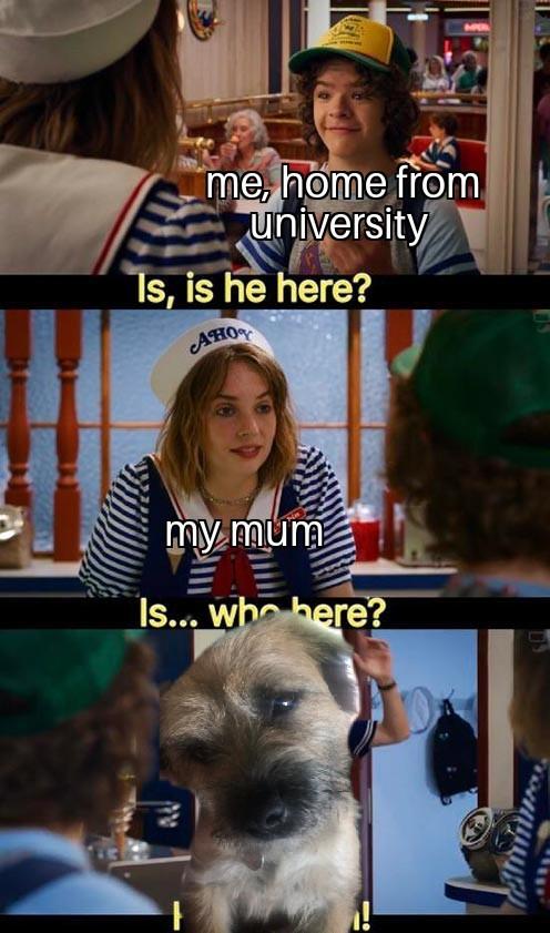 Penny the Pupper - meme