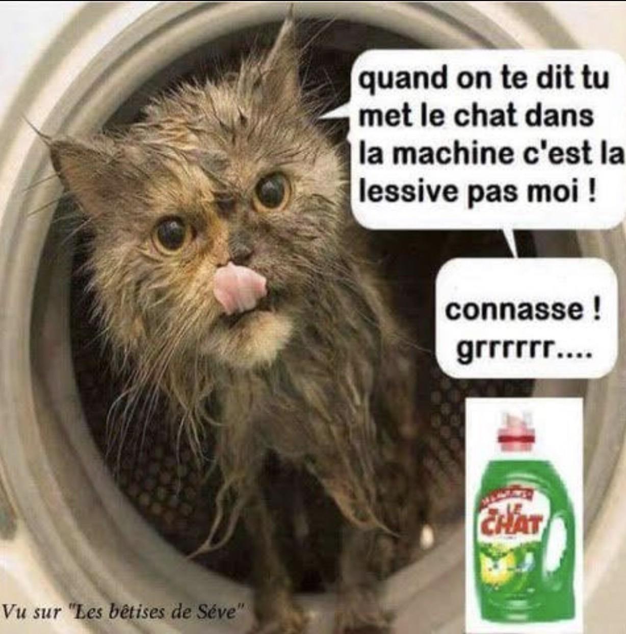 Le chat - meme