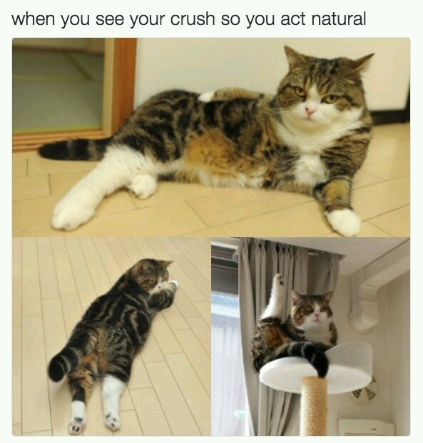 Cat crush - meme