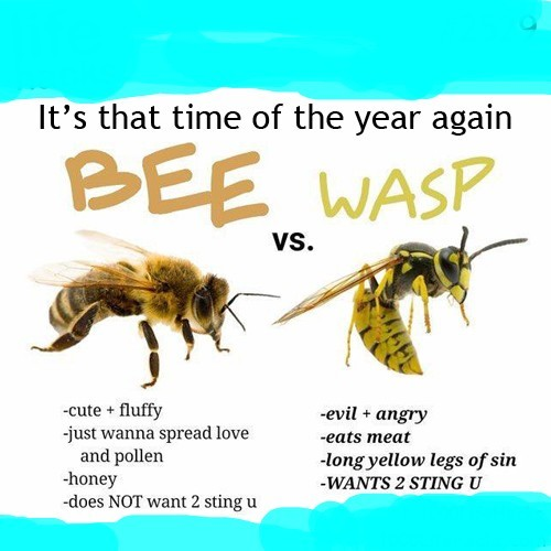 Friendly Bee vs A Fucking Wasp - meme