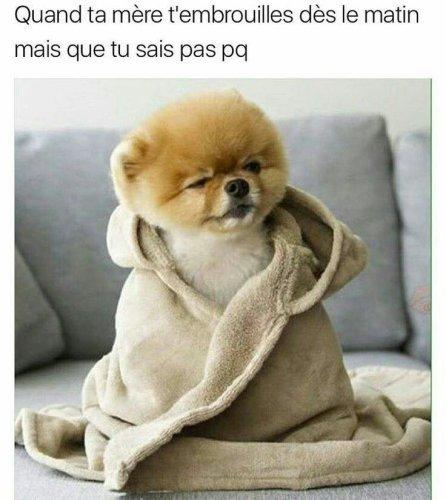 lé chien - meme
