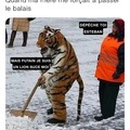 Tigrou...le lion