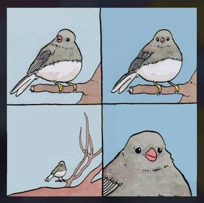 Dead meme but I like birds