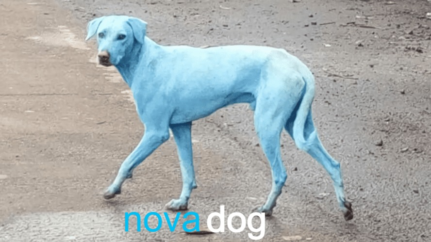 Nova..... - meme