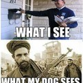 Ce que je vois / ce que mon chien voit