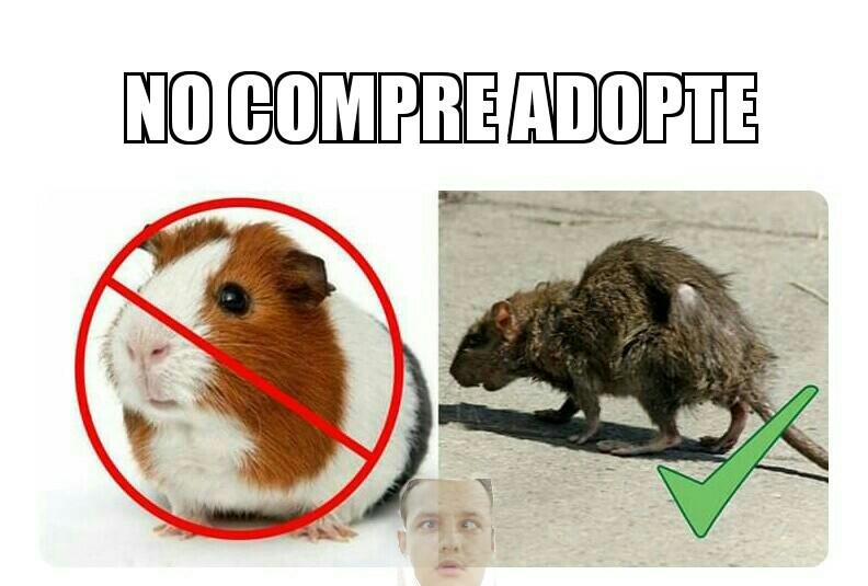 Adoptame - meme