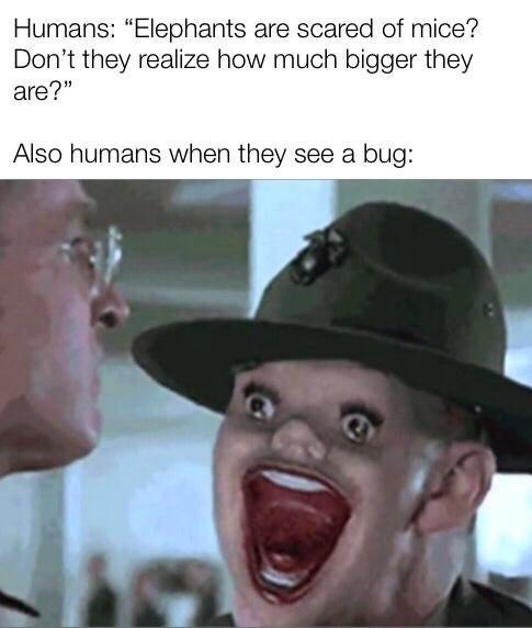 Human fact - meme