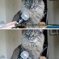 *stares in cat*